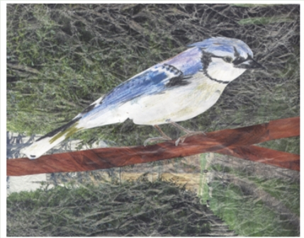 pencil bluejay